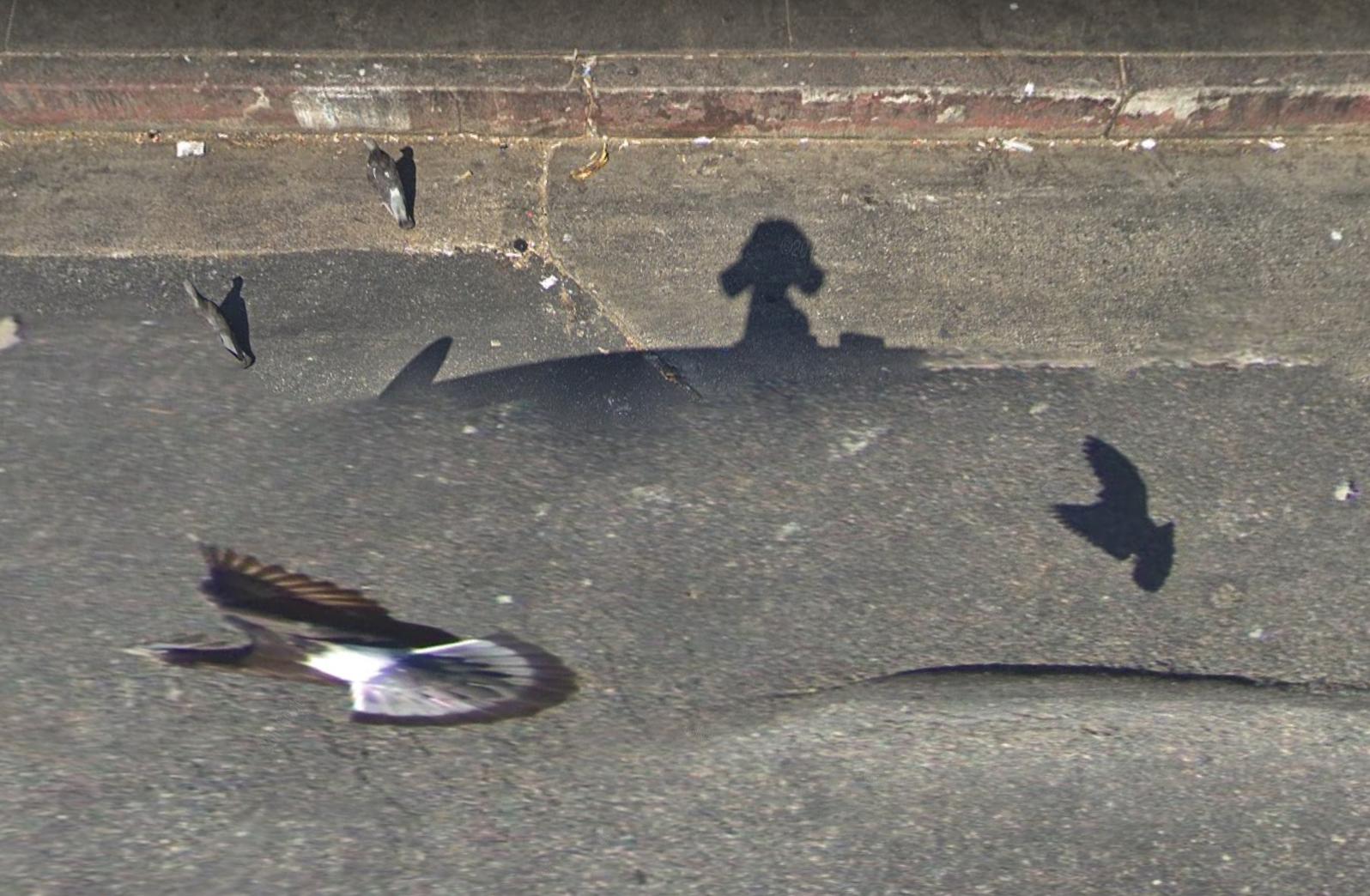 pigeons google street view camera glitch